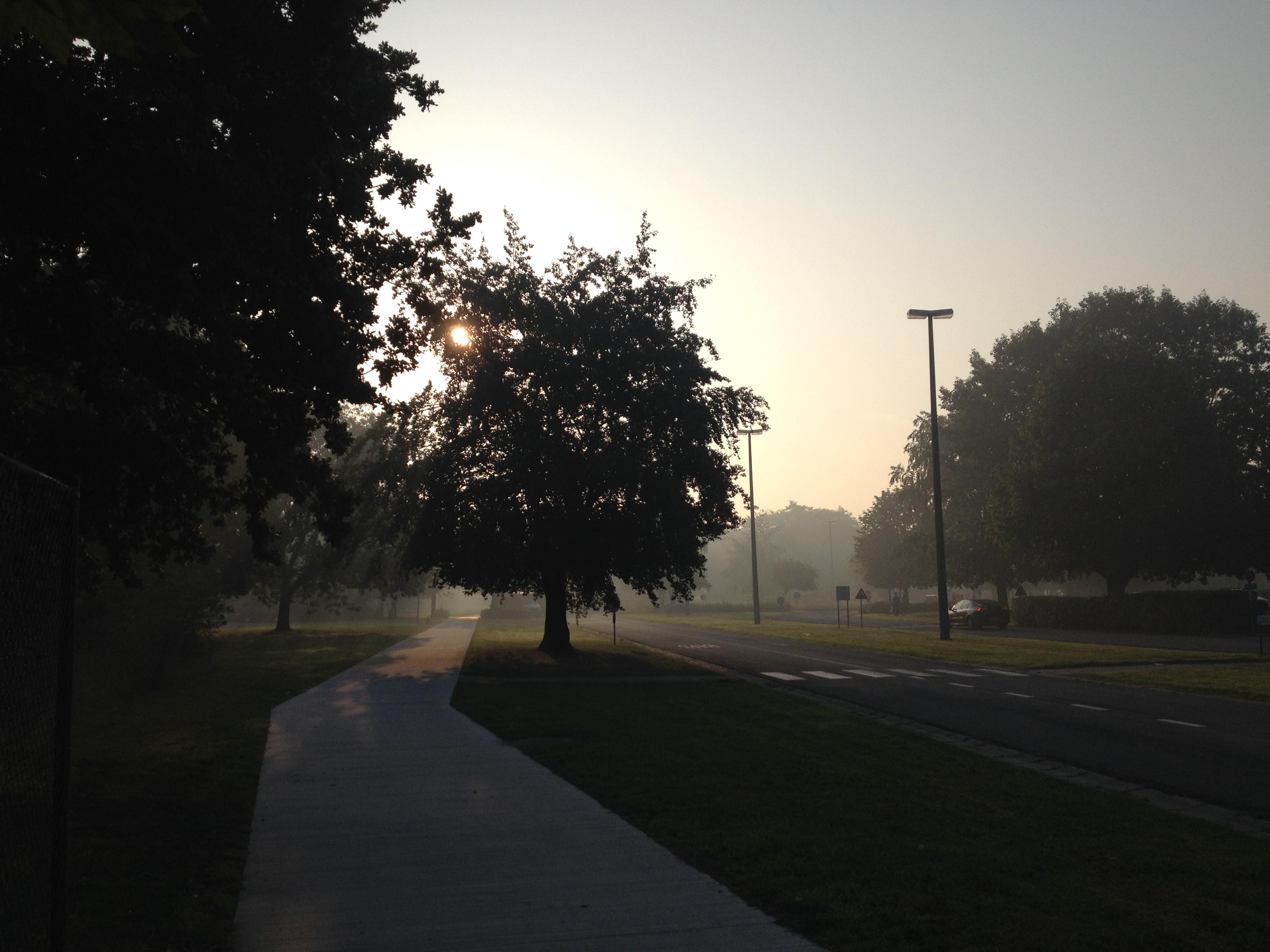 Misty | Julienne