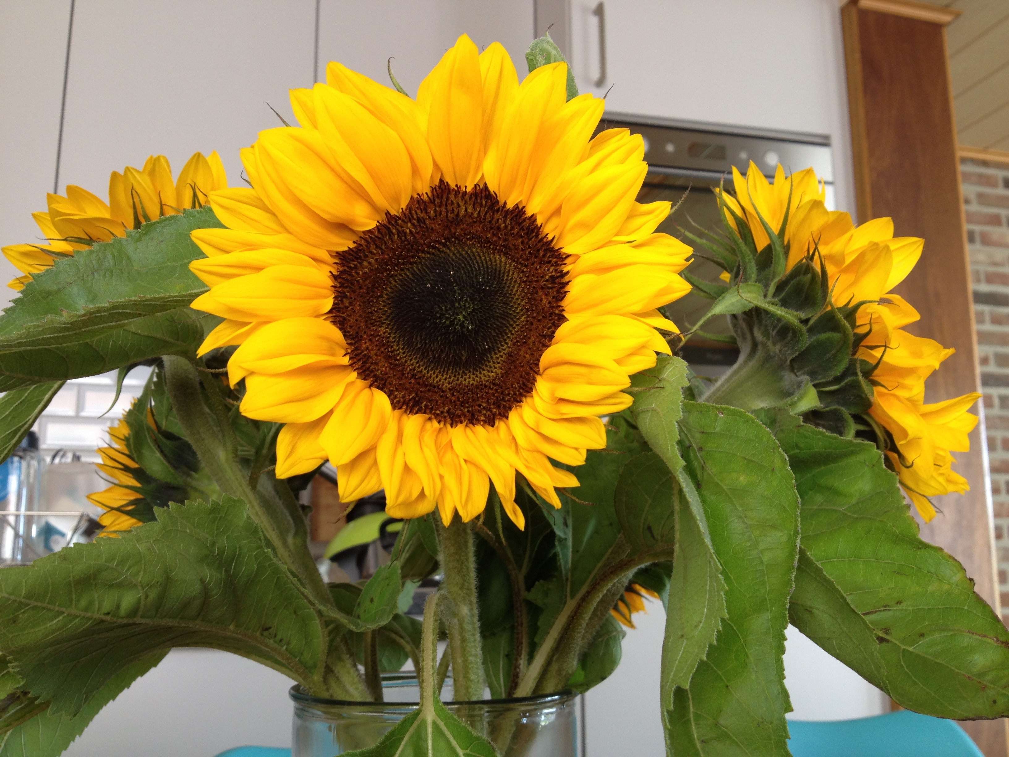 zonnebloemen | Julienne